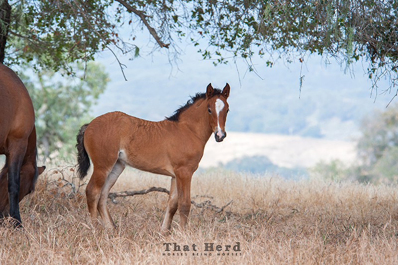 wild horse photography of a filly with wavy hair