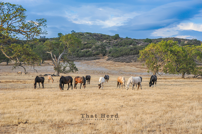 wild horse photography of horses in a summer landscape
