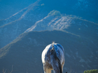 wild horse photography of a colorful yearling in a mountain landscape