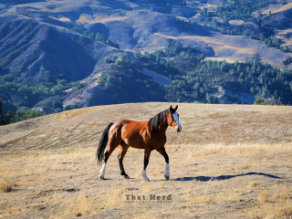 wild horse photography of a lone horse in a mountain landscape