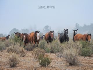 wild horse photography of several horses in a brushy landscape