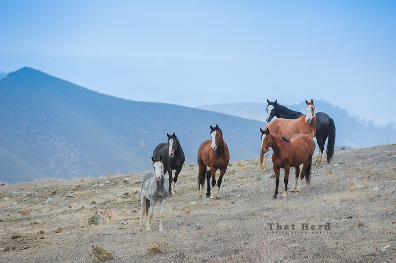 wild horse photography of several horses on a mountain top