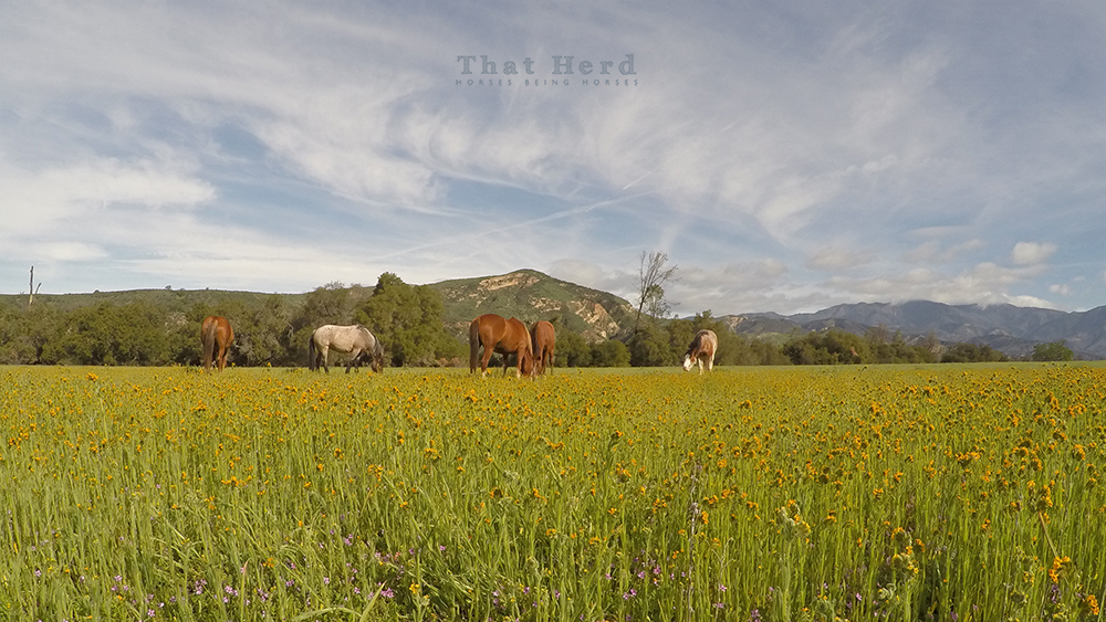 wild horse photography of a beautiful backcountry grazing location