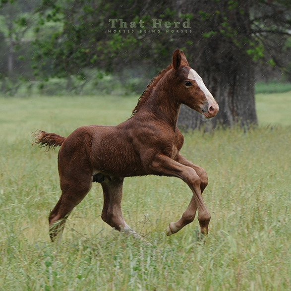 wild horse photography of a noble colt