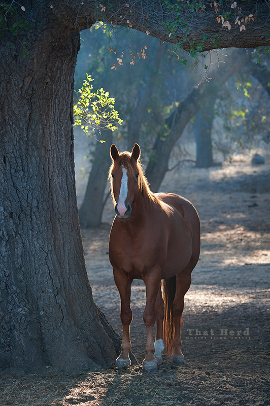 wild horse photography of a filly in the woods