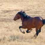 A Horse That Will Not Tire