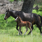 A First Foal
