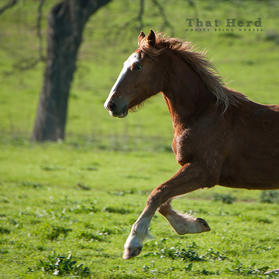 wild horse photography of a three year old colt
