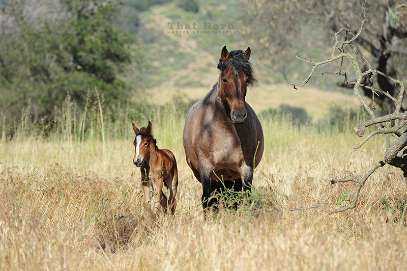 wild horse photography of a clever mare and newborn foal