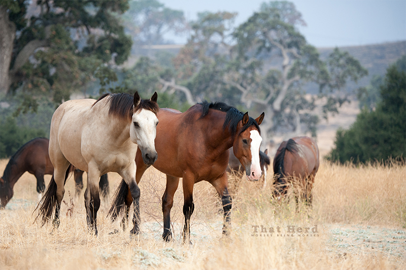 free range horse photography of two attractive horses