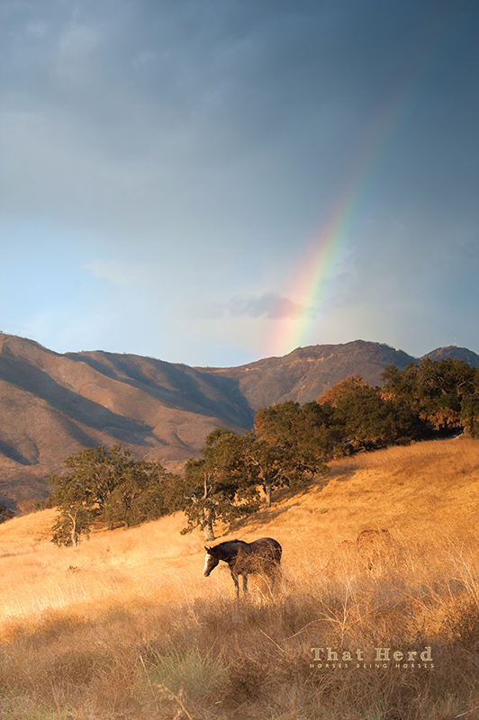 Free range horse photography of a horse under a rainbow