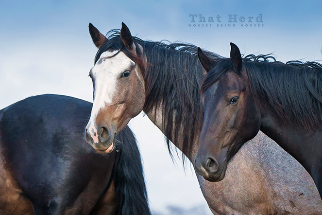free range horse photography of two older fillies