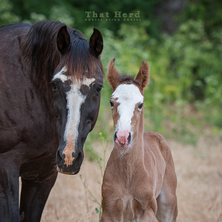 free range horse photography of a mare and her newborn colt