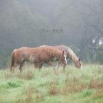 Quiet Misty Mornings