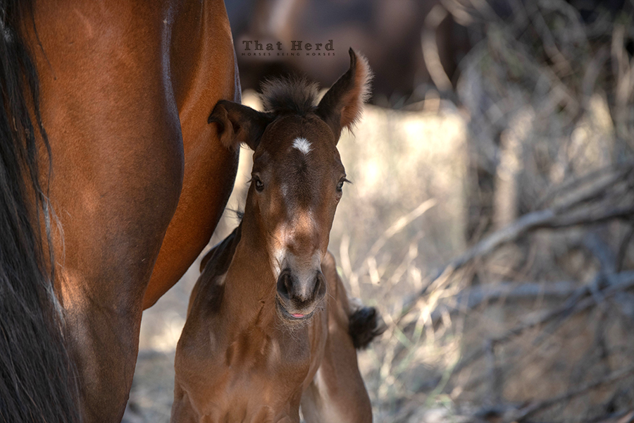 free range horse photography of a newborn colt