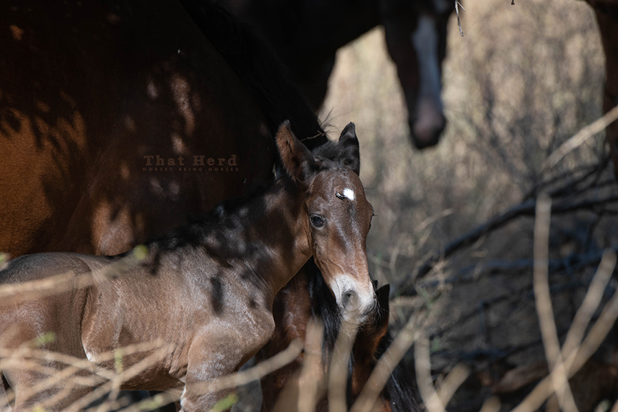 free range horse photography of a foal and horse fly