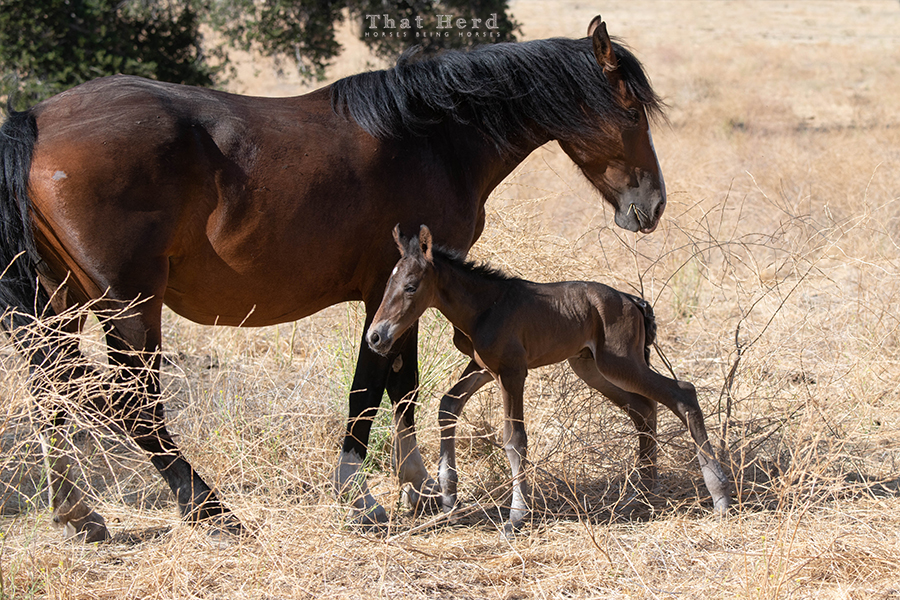 free range horse photography of an August newborn foal