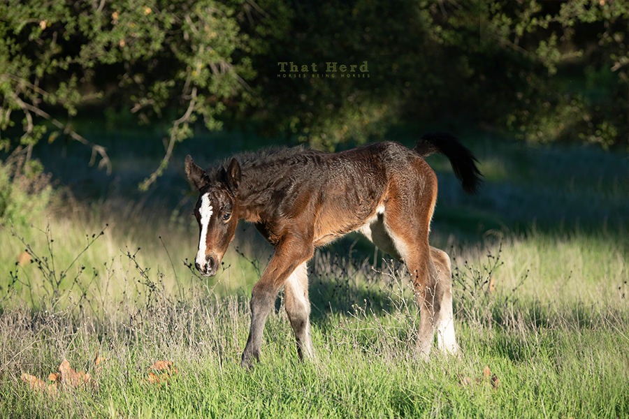 free range horse photography of a new January foal