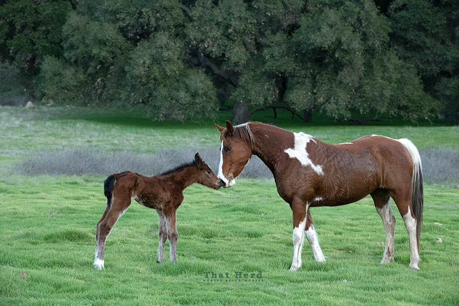 free range horse photography of a mare and newborn foal