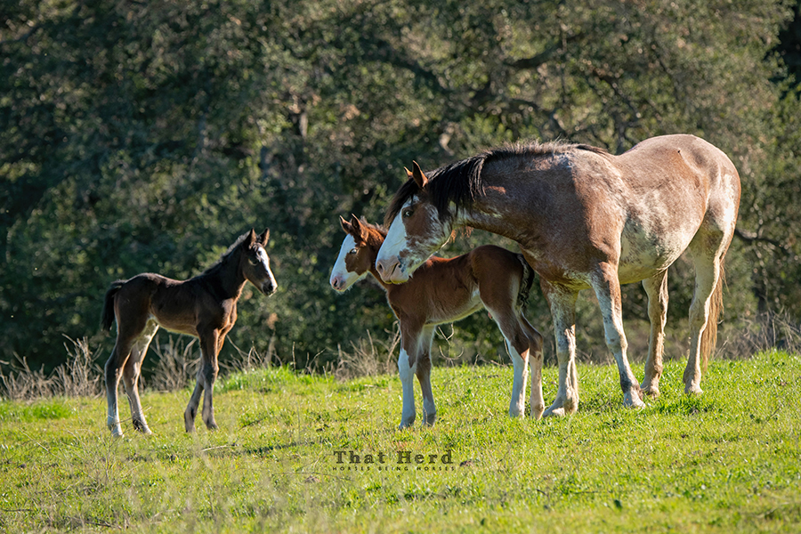 free range horse photography of two foals meeting