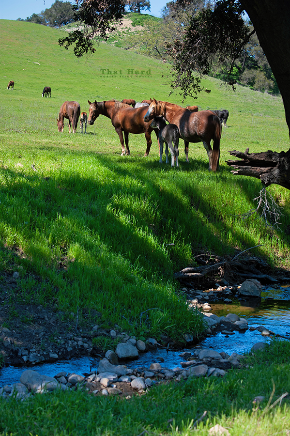 free range horse photography of green grass and running water