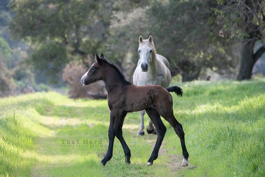 free range horse photography of a new colt with many qualities and extra long legs