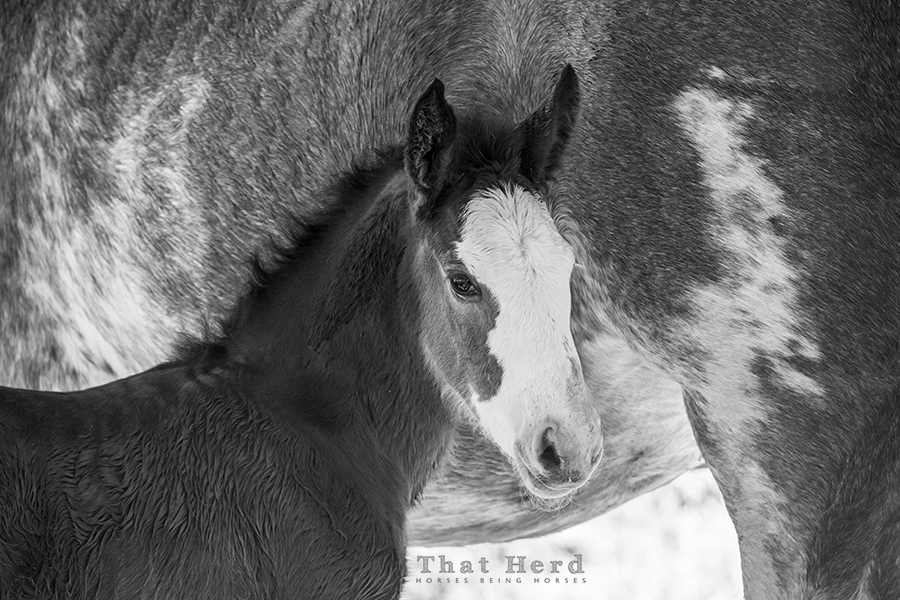 free range horse photography of a newborn colt with lots of white