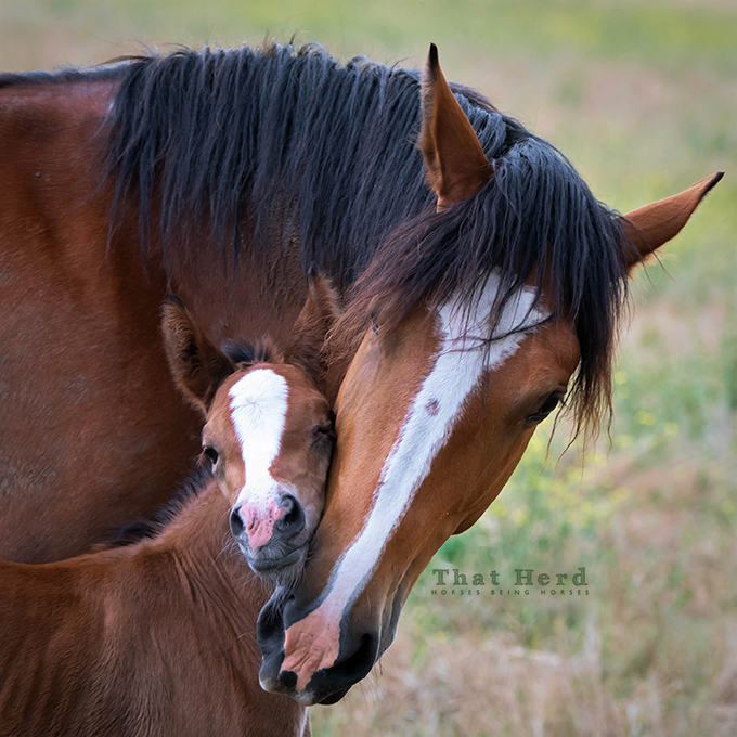 free range horse photography of a new mother's devotion to her new foal