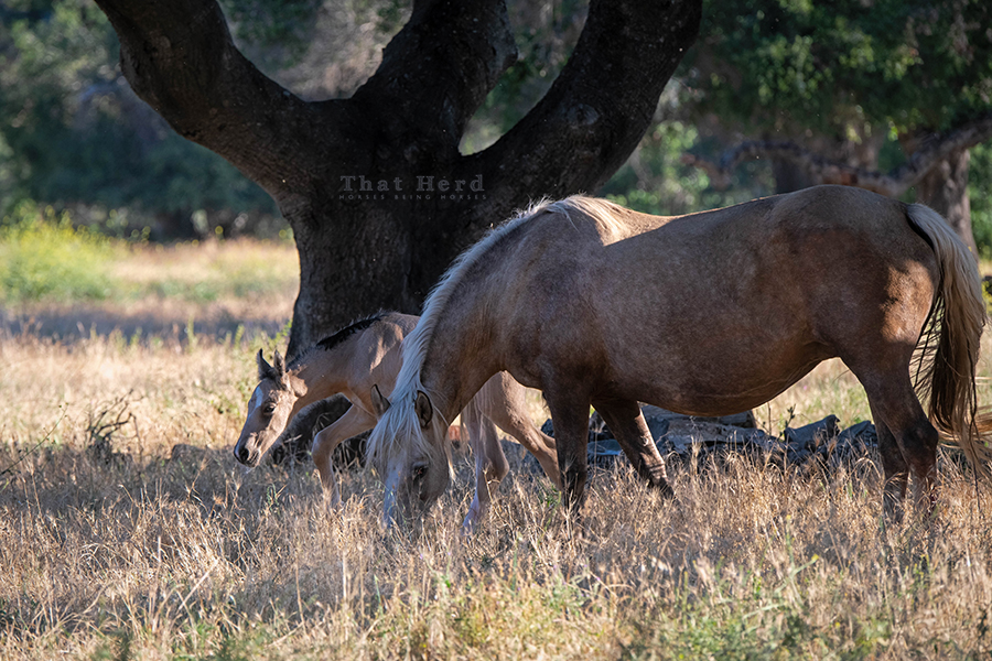free range horse photography of a mare sheltering her newborn foal in woods
